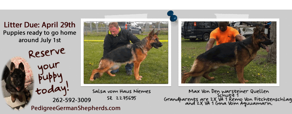 German Shepherd Puppies For Sale Northern IL