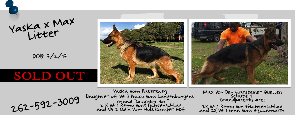 German Shepherds Puppies For Sale Madison WI