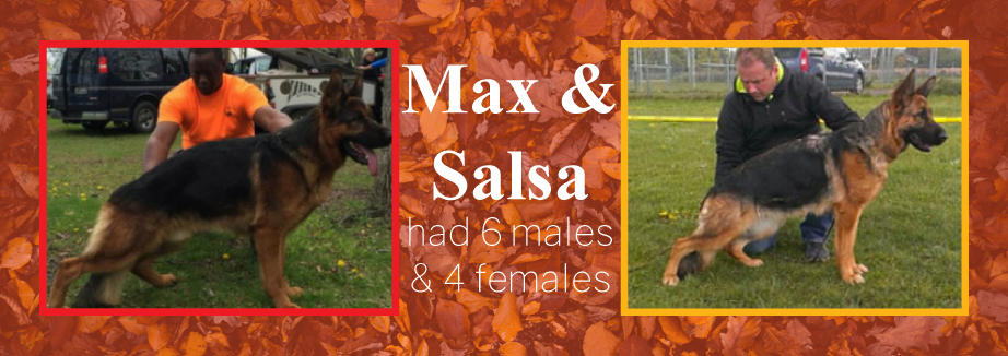 Max-and-Salsa-Announcement