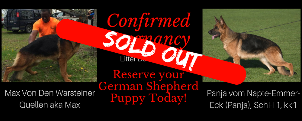 Panja&Max SOLD OUT