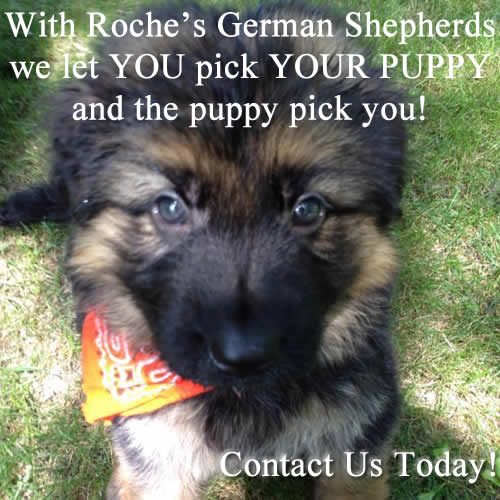 German Shepherd Breeders Wisconsin