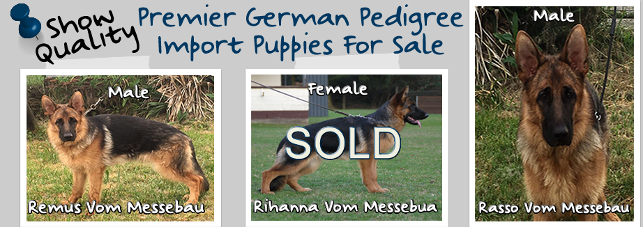 Premier-German-Pedigree-Import-Puppies-Available-976×326-Sold-Female